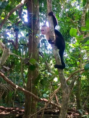 monkeymanuelantonio
